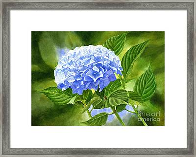 Blue Hydrangea Blossom With Background 2 Framed Print by Sharon Freeman