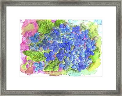 Framed Print featuring the painting Blue Hydrangea by Cathie Richardson