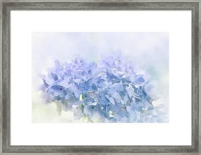 Blue Hydrangea Light Framed Print