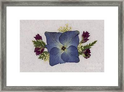 Blue Hydrangea Pressed Floral Design Framed Print