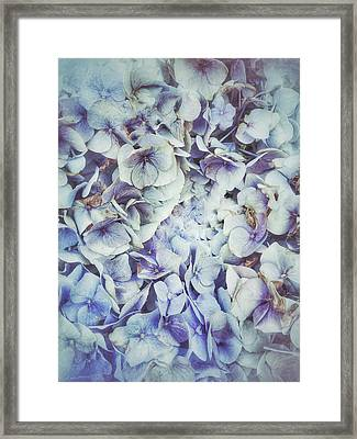 Blue Hydrangeas Background  Framed Print