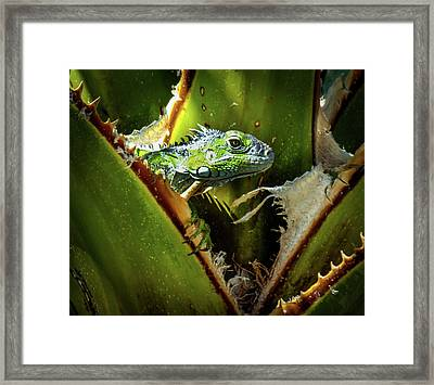 Blue Iguana Framed Print