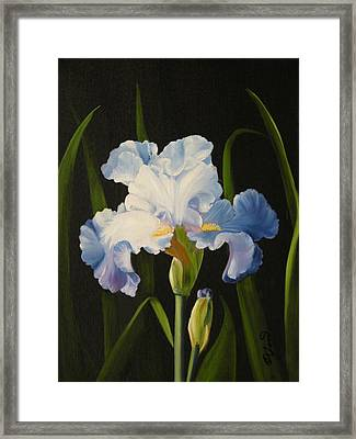 Framed Print featuring the painting Blue Iris by Joni McPherson