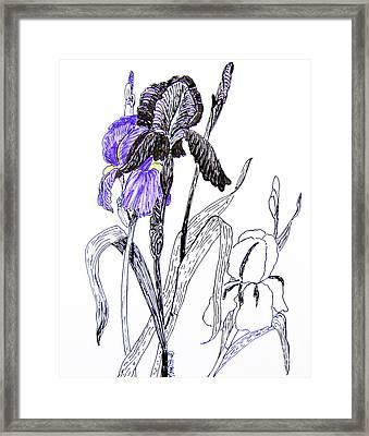 Blue Iris Framed Print by Marilyn Smith