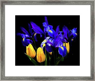 Blue Iris Waltz By Karen Wiles Framed Print by Karen Wiles