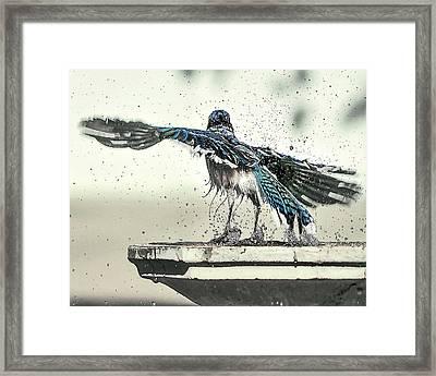 Blue Jay Bath Time Framed Print