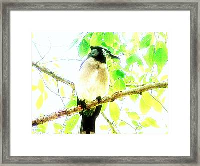Framed Print featuring the photograph Blue Jay IIi by Clarice  Lakota