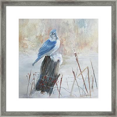 Blue Jay In Winter Framed Print by Roseann Gilmore