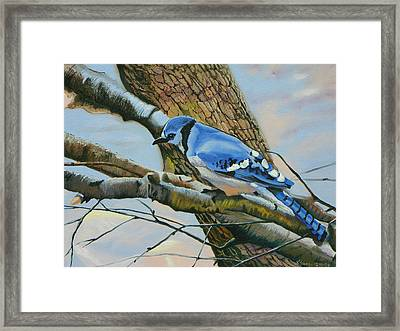 Blue Jay Framed Print by Kenneth Young