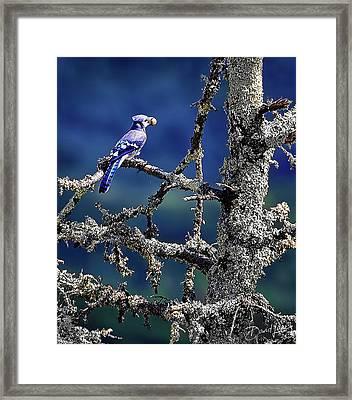 Blue Jay Mountain Framed Print