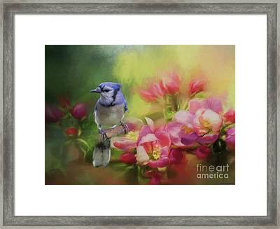 Blue Jay On A Blooming Tree Framed Print