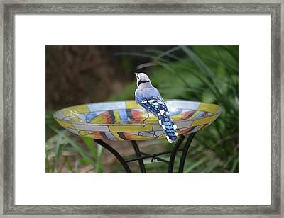 Blue Jay On Birdbath 5 Framed Print