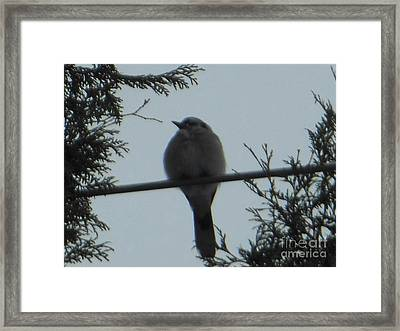 Blue Jay On Wire Framed Print