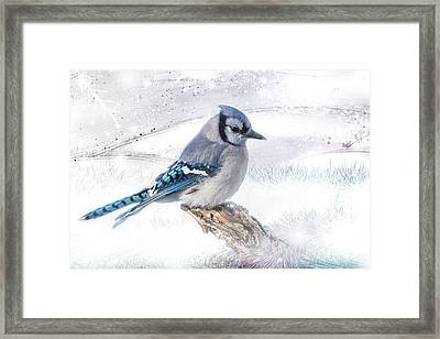 Blue Jay Snow Framed Print