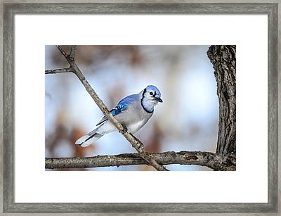 Framed Print featuring the photograph Singing My Song by Steven Santamour