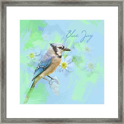 Blue Jay Watercolor Photo Framed Print by Heidi Hermes