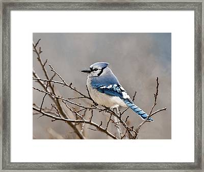 Blue Jay Way Framed Print