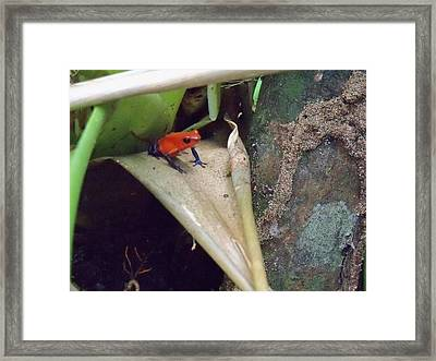 Blue Jean Frog Framed Print by William Patterson