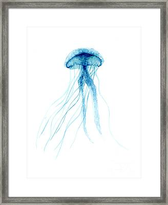 Blue Jellyfish Minimalist Painting Framed Print by Joanna Szmerdt