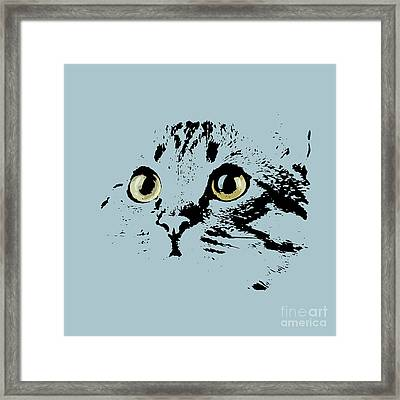 Blue Kitten Portrait Framed Print by Pablo Franchi