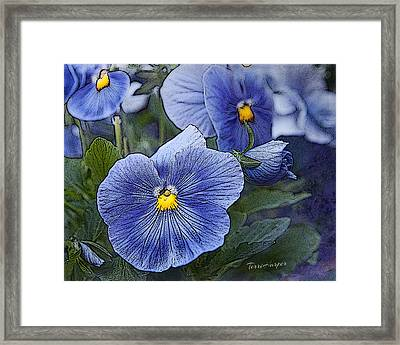 Blue Ladies Framed Print