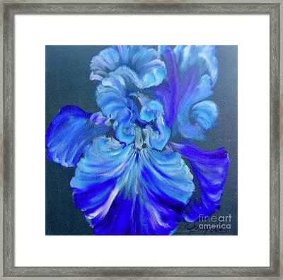 Blue/lavender Iris Framed Print