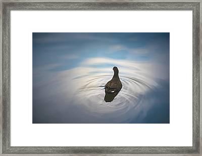 Blue Light Moorhen Framed Print