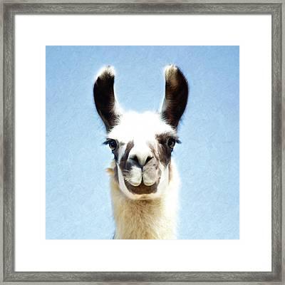 Blue Llama Framed Print