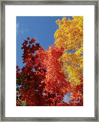 Blue Maple Framed Print by The Stone Age