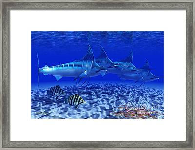 Blue Marlin Pack Framed Print by Corey Ford