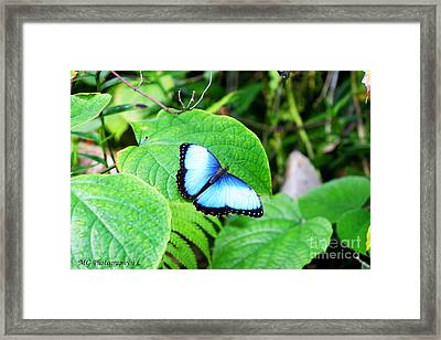 Framed Print featuring the photograph Blue by Marty Gayler