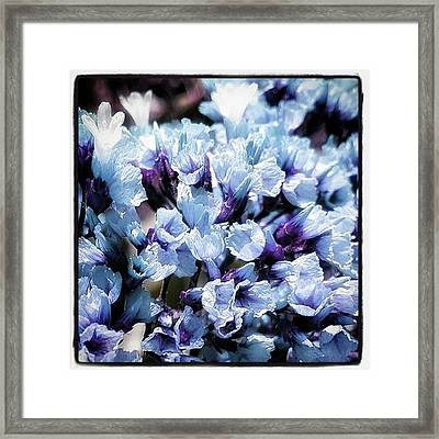 Framed Print featuring the photograph Blue Melancholia. #flowerart by Mr Photojimsf