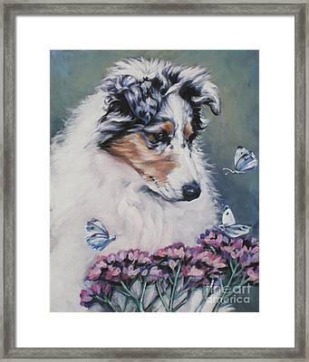 Blue Merle Collie Pup Framed Print by Lee Ann Shepard