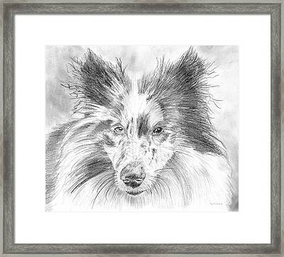 Blue Merle Sheltie Graphite Drawing Framed Print