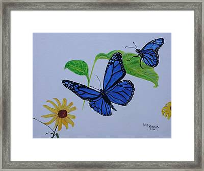 Blue Monarch Framed Print