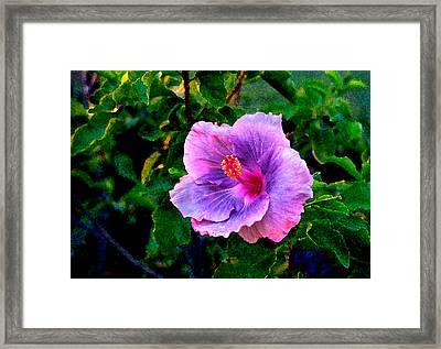 Blue Moon Hibiscus Framed Print by Steve Karol