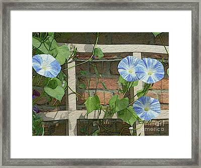 Blue Morning Glories Framed Print