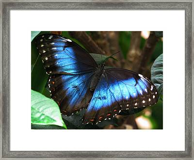 Blue Morph Framed Print by Angela Davies