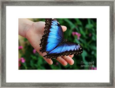 Blue Morph Framed Print by Denise Irving