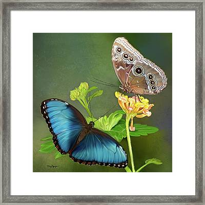 Blue Morpho  Butterflies Framed Print by Thanh Thuy Nguyen