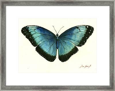Blue Morpho Butterfly Framed Print by Juan Bosco