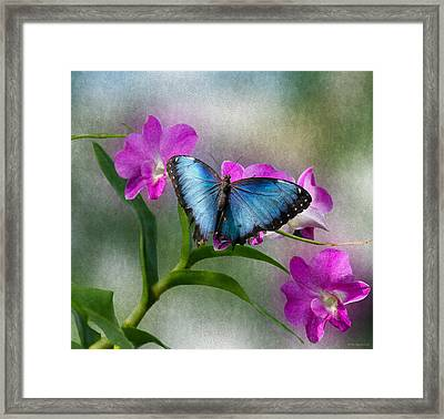 Blue Morpho With Orchids Framed Print