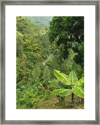 Blue Mountain Coffee Grows Where? Framed Print
