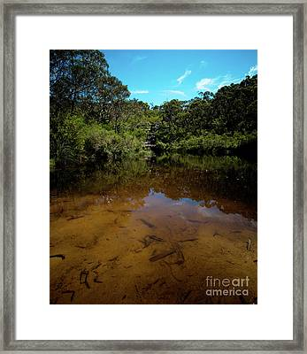 Blue Mountains Waterhole Ingar Lake Framed Print by John Buxton