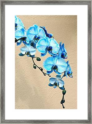 Blue Mystique Orchid Framed Print
