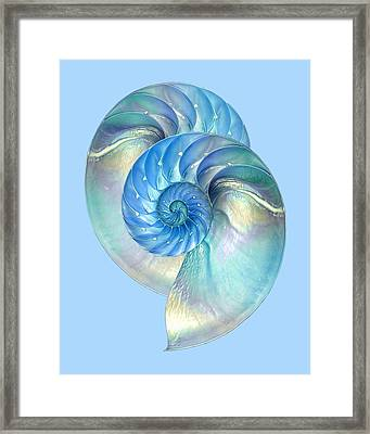 Blue Nautilus Pair Framed Print by Gill Billington