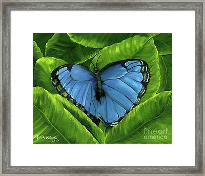 Blue Night Butterfly Framed Print by Maria Williams