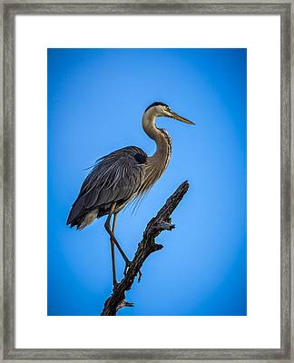 Blue On Blue Framed Print by Marvin Spates
