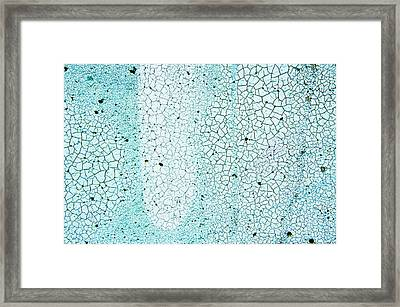Blue Paint Framed Print by Tom Gowanlock