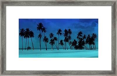Blue Palms Framed Print by Sean Davey